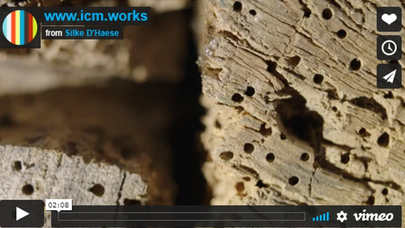 Integrated contamination management, insectenbestrijding in museumcollecties